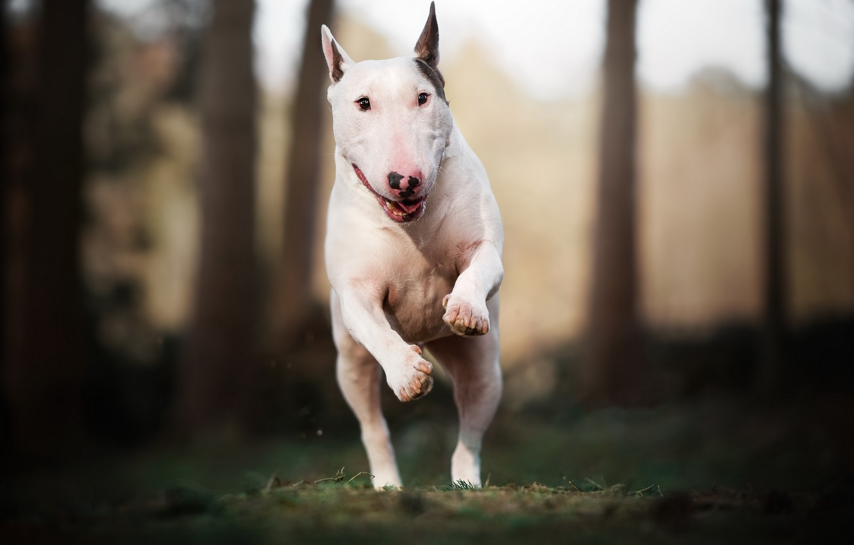 Photo wallpaper nature, dog, running