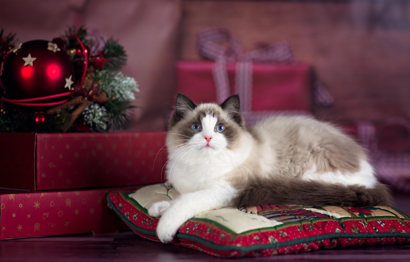 Wallpaper cat, cat, animal, holiday, new year, Christmas, pillow