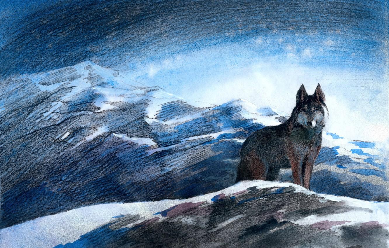 Photo wallpaper winter, mountains, blue eyes, grey wolf, Aibek Begalin, Illustrations of Aitmatov, Block color