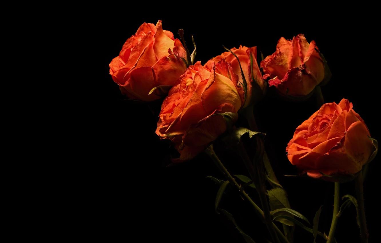 Photo wallpaper flowers, stems, roses, bouquet, black background, orange, buds, fire