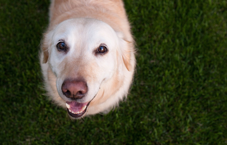 Photo wallpaper eyes, look, dog, my friend