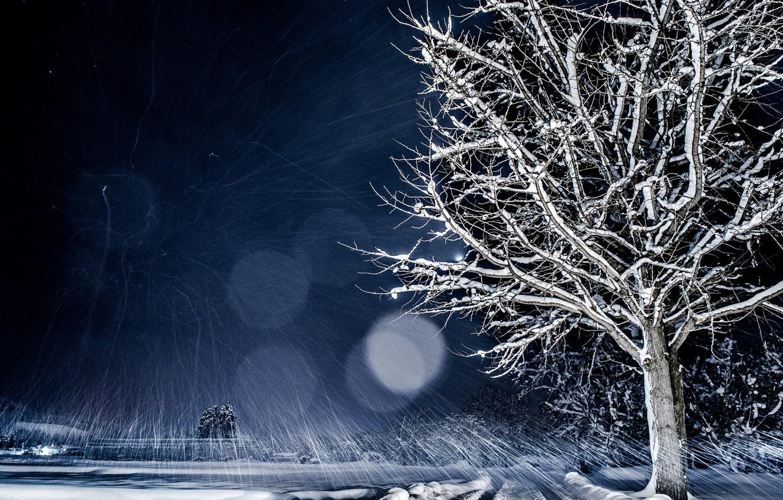 Photo wallpaper winter, snow, night, nature, tree, bokeh