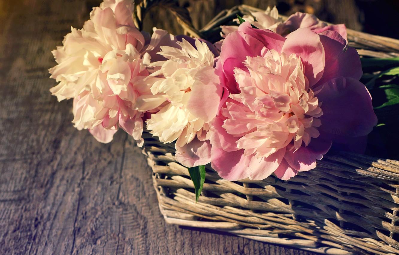 Photo wallpaper basket, pink, wood, pink, flowers, beautiful, peonies, peony