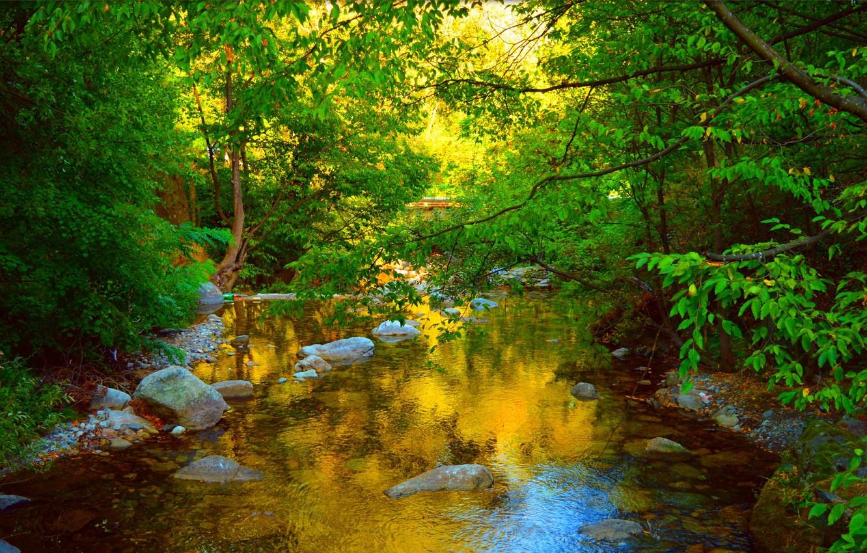 Photo wallpaper Greens, Nature, Pond, Stones, Nature, Green, Pond