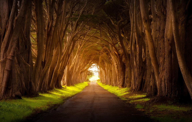 Photo wallpaper road, light, trees, nature