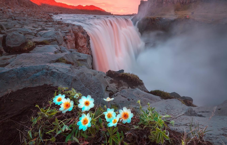 Photo wallpaper summer, light, flowers, mountains, rocks, waterfall, the evening, Iceland