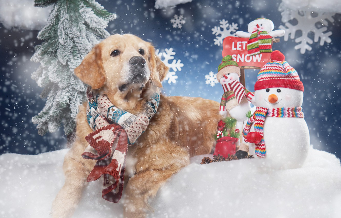 Photo wallpaper snow, snowflakes, dog, scarf, snowmen, Golden Retriever, Golden Retriever