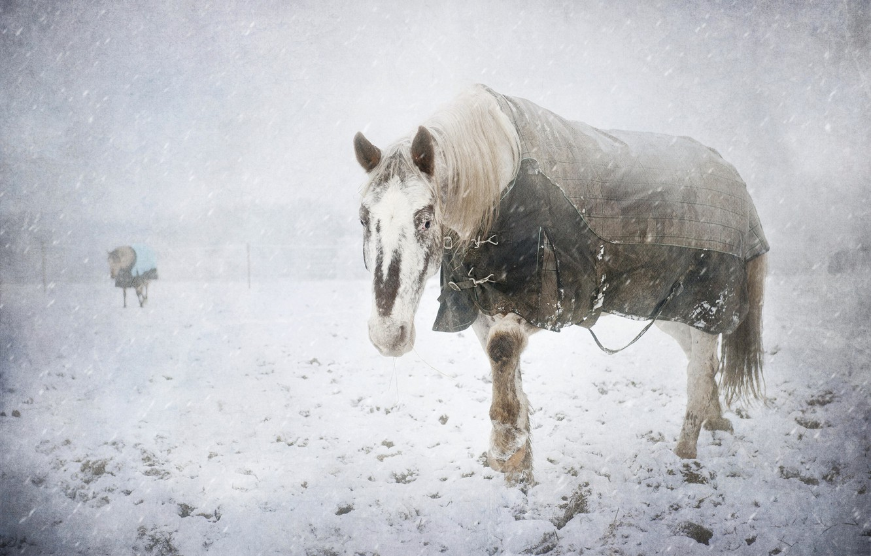 Photo wallpaper cold, winter, snow, horse