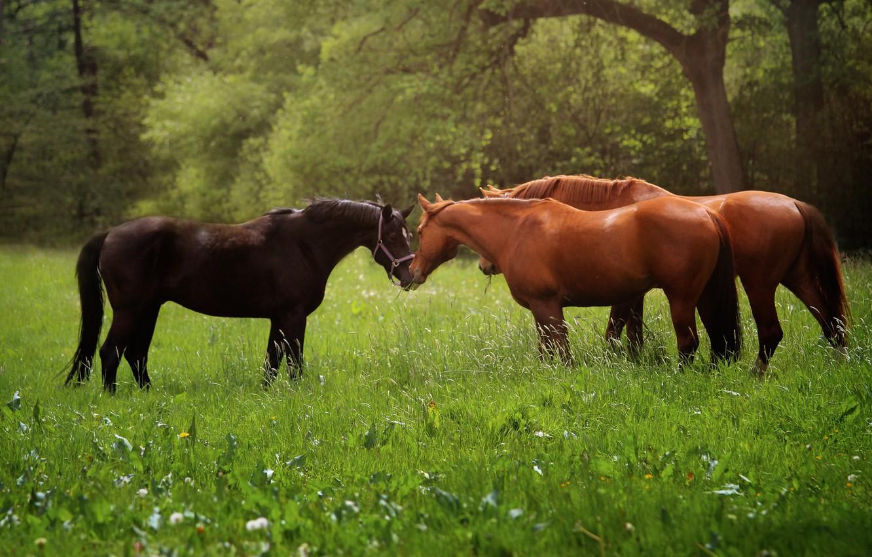 Photo wallpaper animals, grass, nature, horse