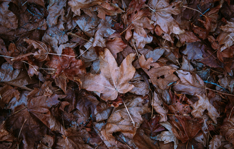 Photo wallpaper autumn, leaves, fallen