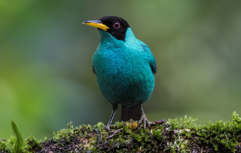 Photo wallpaper birds, male, mangrovye, green SAI