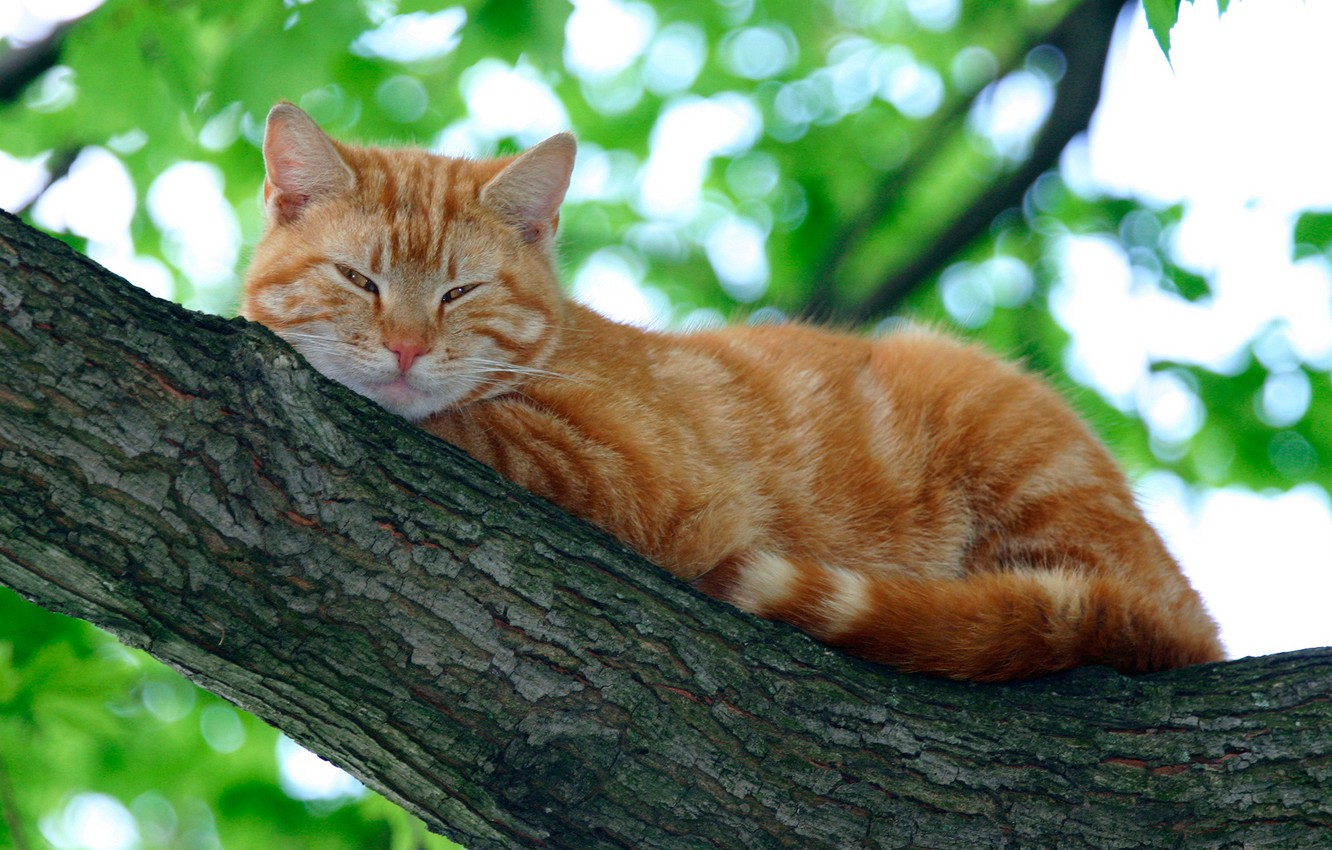 Photo wallpaper cat, leaves, branches, nature, red, lies, resting, on the tree, bokeh