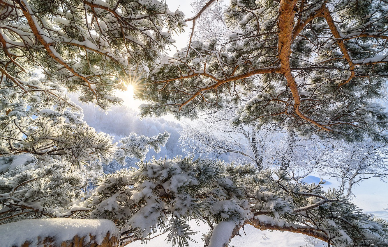 Photo wallpaper cold, winter, the sun, snow, tree, frost, Altay, frosty morning