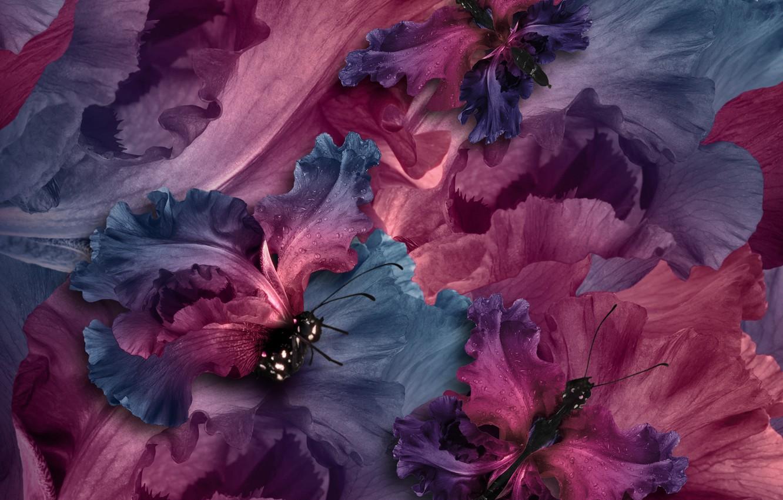 Photo wallpaper butterfly, petals, water, purple, butterflies, floral