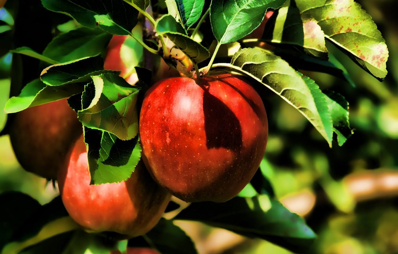 Photo wallpaper summer, nature, apples