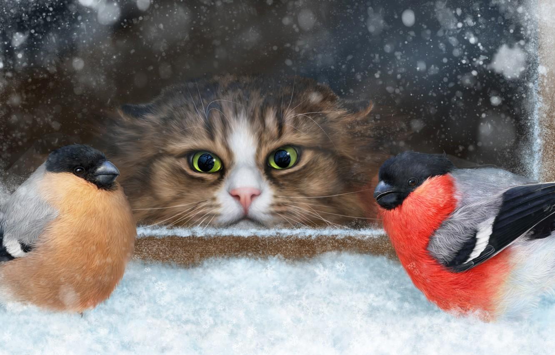 Photo wallpaper cat, snow, birds, muzzle, observation, bullfinches