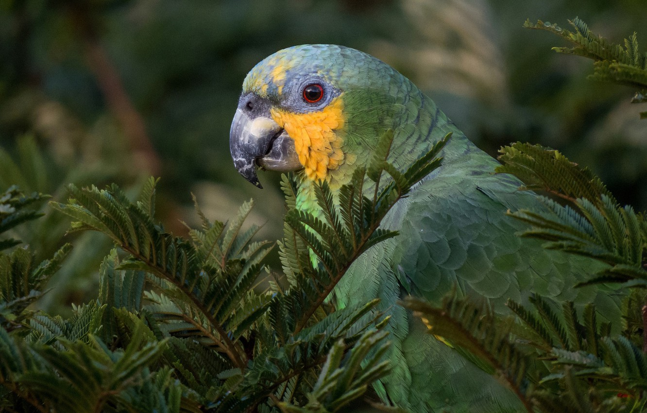 Photo wallpaper look, branches, nature, green, tree, bird, parrot