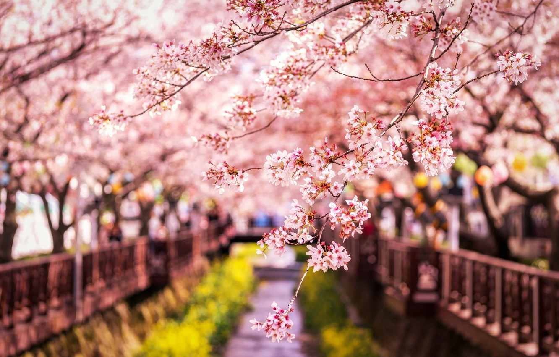 Wallpaper Branches Spring Japan Sakura Images For Desktop
