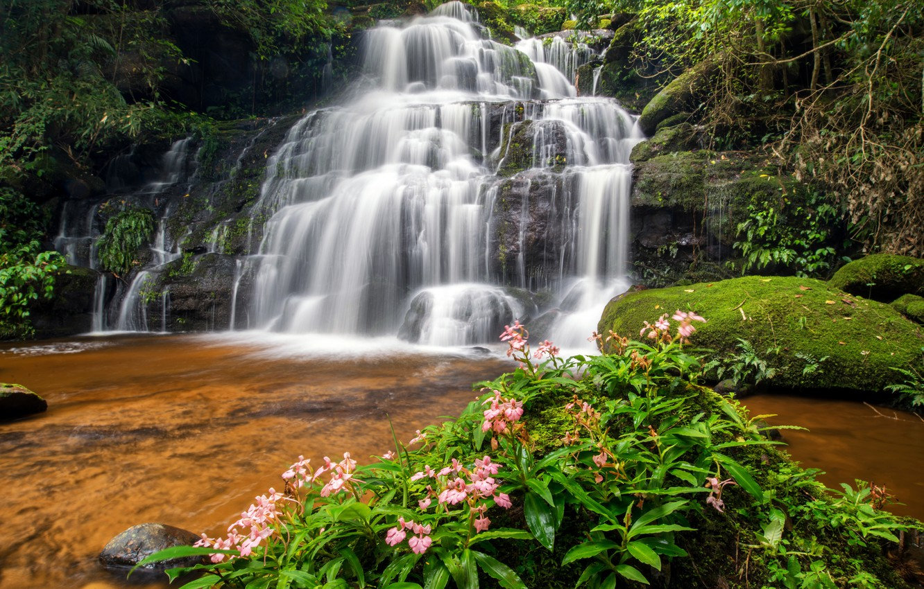 Photo wallpaper forest, river, waterfall, forest, river, landscape, jungle, beautiful, waterfall, tropical