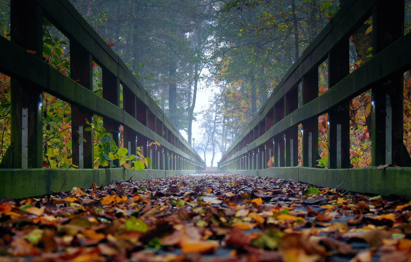 Photo wallpaper autumn, leaves, trees, fog, the bridge, ultra hd, autumn in the forest, bridge in the …