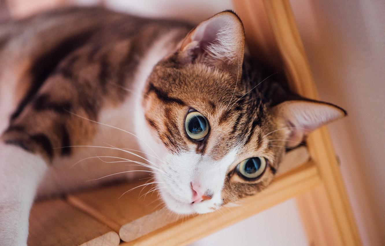 Photo wallpaper cat, eyes, cat