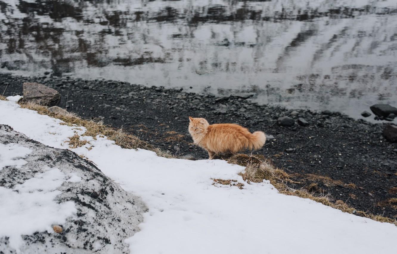 Photo wallpaper cat, snow, wool, red