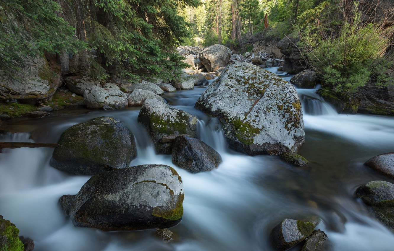 Photo wallpaper forest, stones, USA, river, Yellowstone National Park