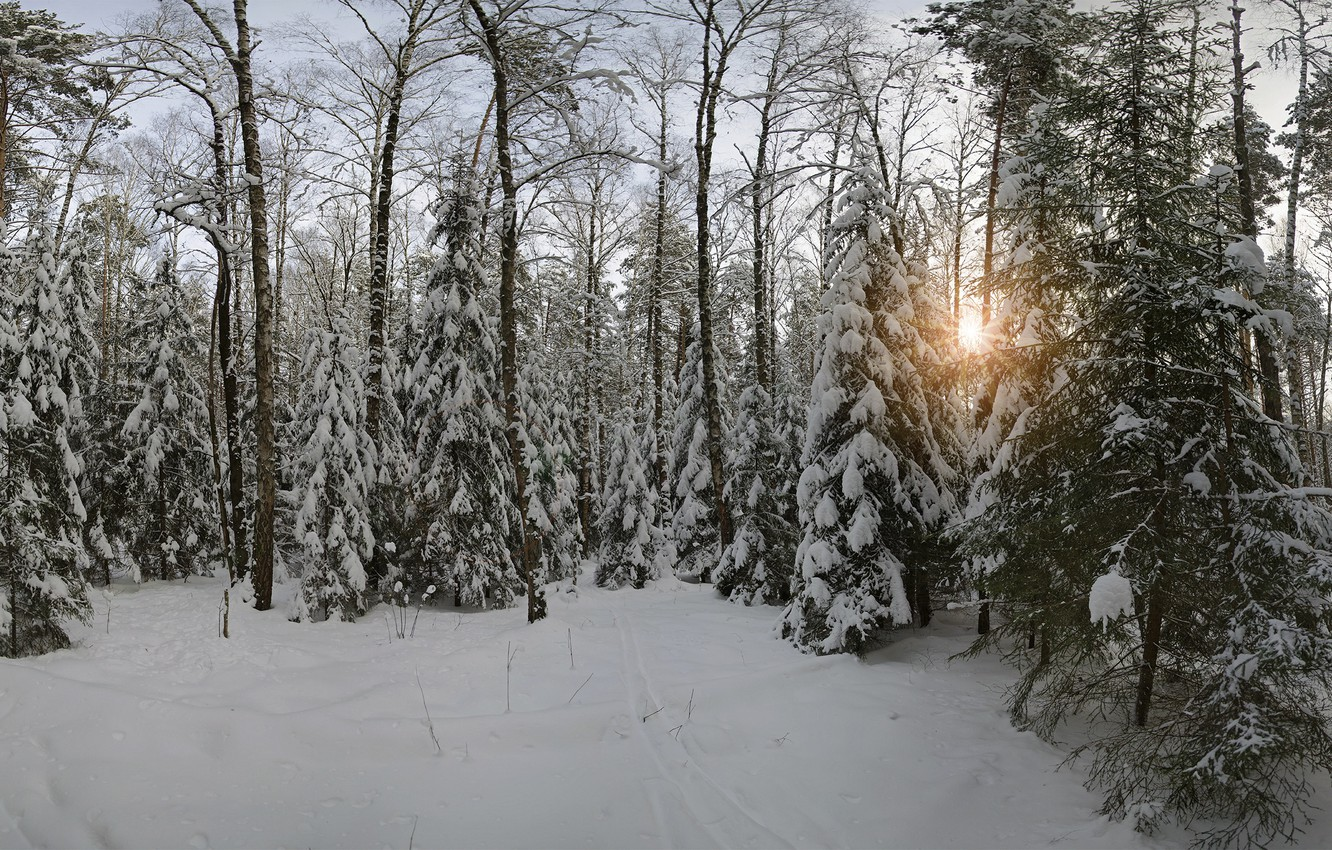 Photo wallpaper winter, snow, nature, Forest, Moscow oblast