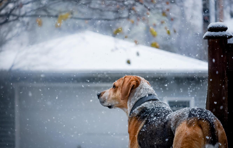 Photo wallpaper winter, snow, dog