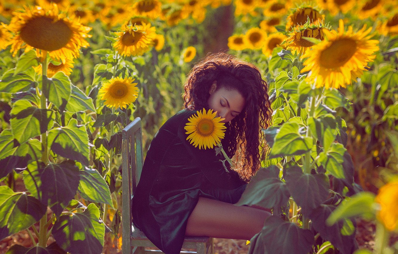 Photo wallpaper field, girl, sunflowers, mood, chair