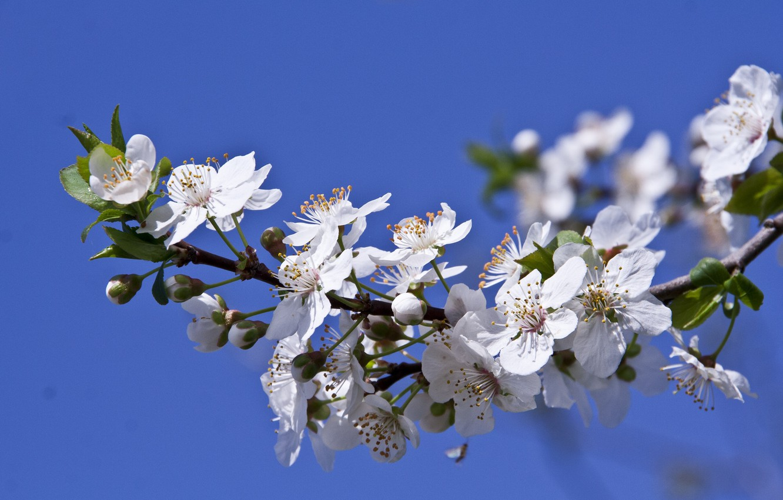 Photo wallpaper macro, branch, spring, flowering, flowers, drain
