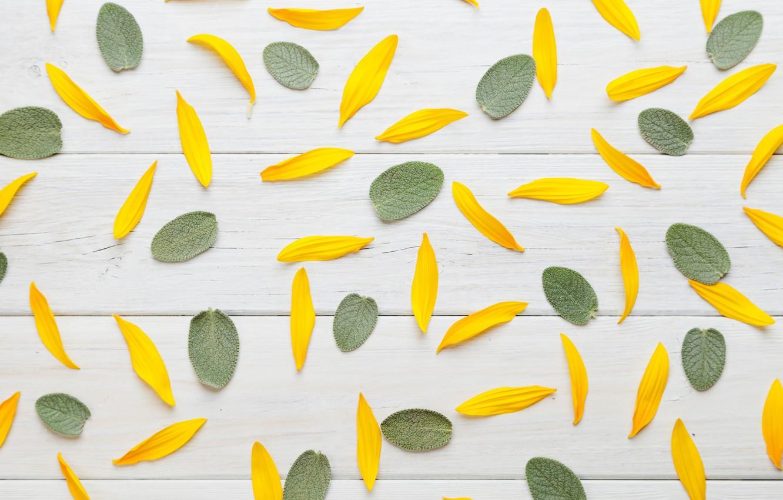 Photo wallpaper leaves, texture, petals, BACKGROUND