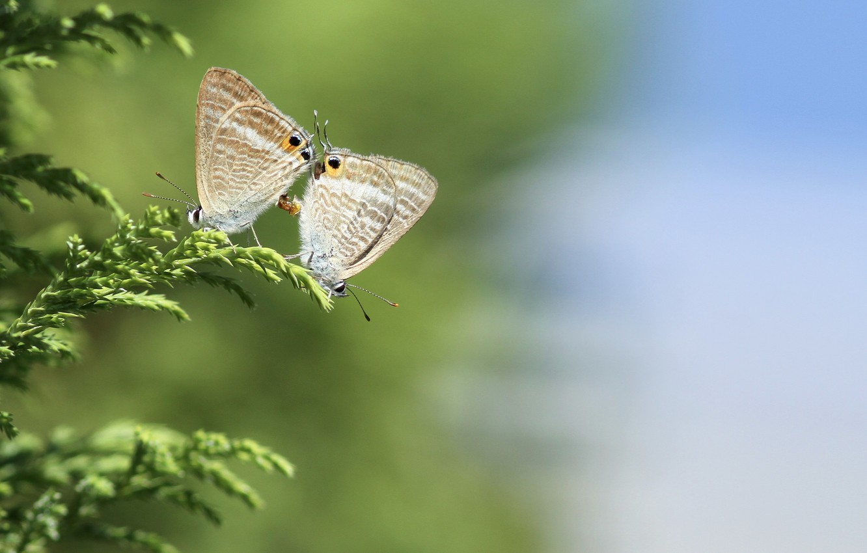 Photo wallpaper grass, macro, butterfly, nature, pair