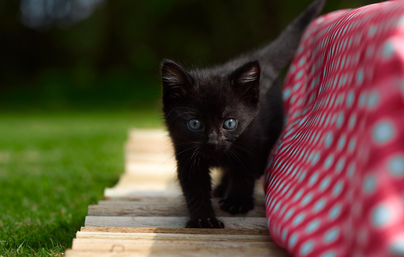Wallpaper Kitty Baby Black Kitten Images For Desktop Section Koshki Download