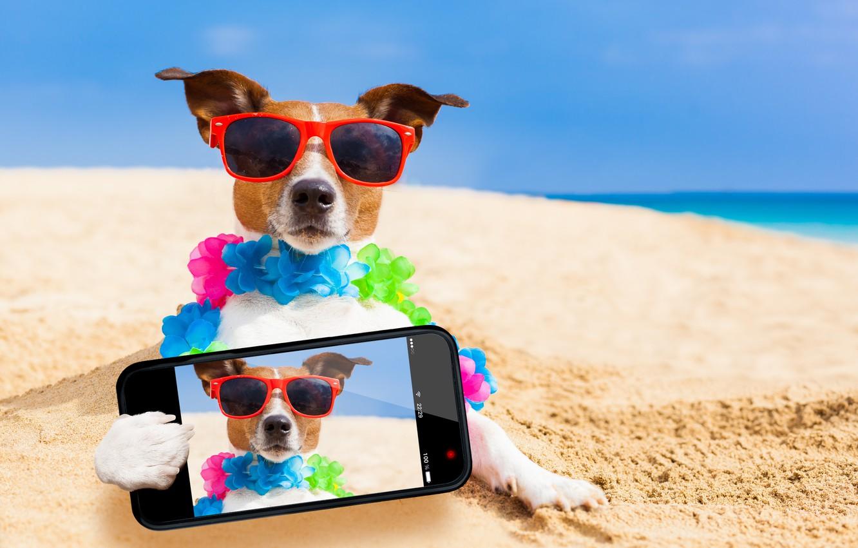 Photo wallpaper sand, sea, beach, the sun, photo, stay, humor, glasses, bokeh, smartphone, Jack Russell Terrier