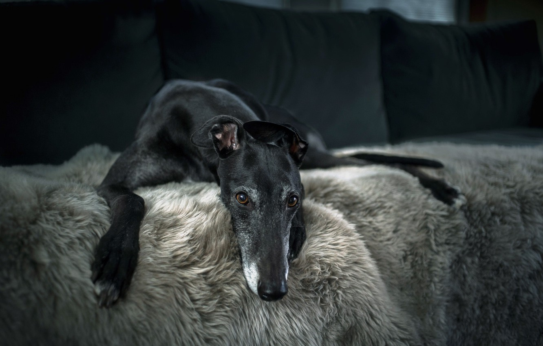 Photo wallpaper comfort, house, dog