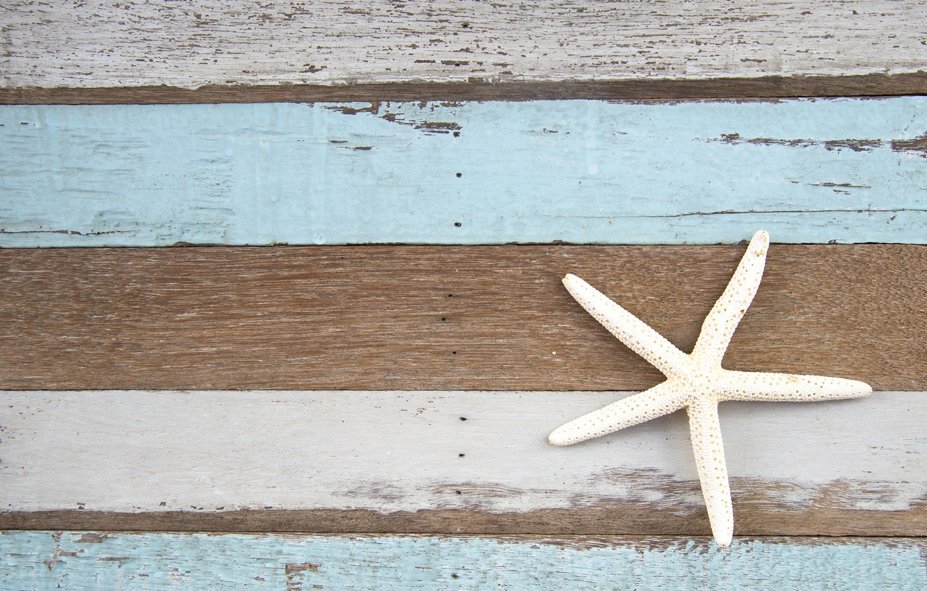 Photo wallpaper background, tree, Board, starfish, vintage, texture, background, marine, wooden, starfish