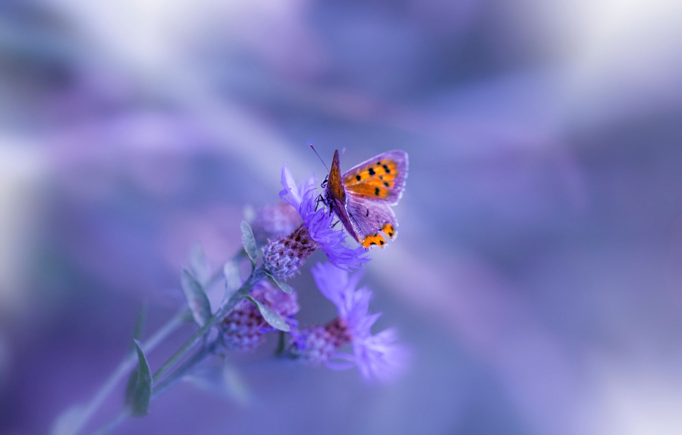 Photo wallpaper macro, background, butterfly, plant