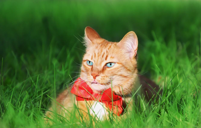 Photo wallpaper greens, cat, weed, tie