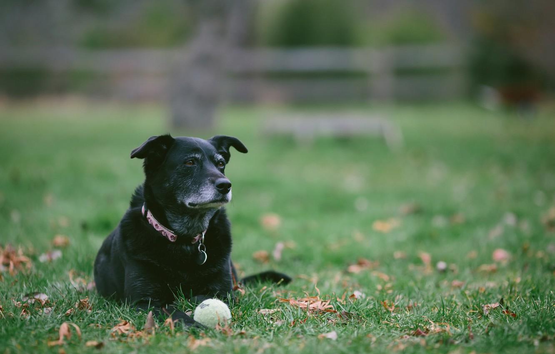 Photo wallpaper look, each, the ball, dog