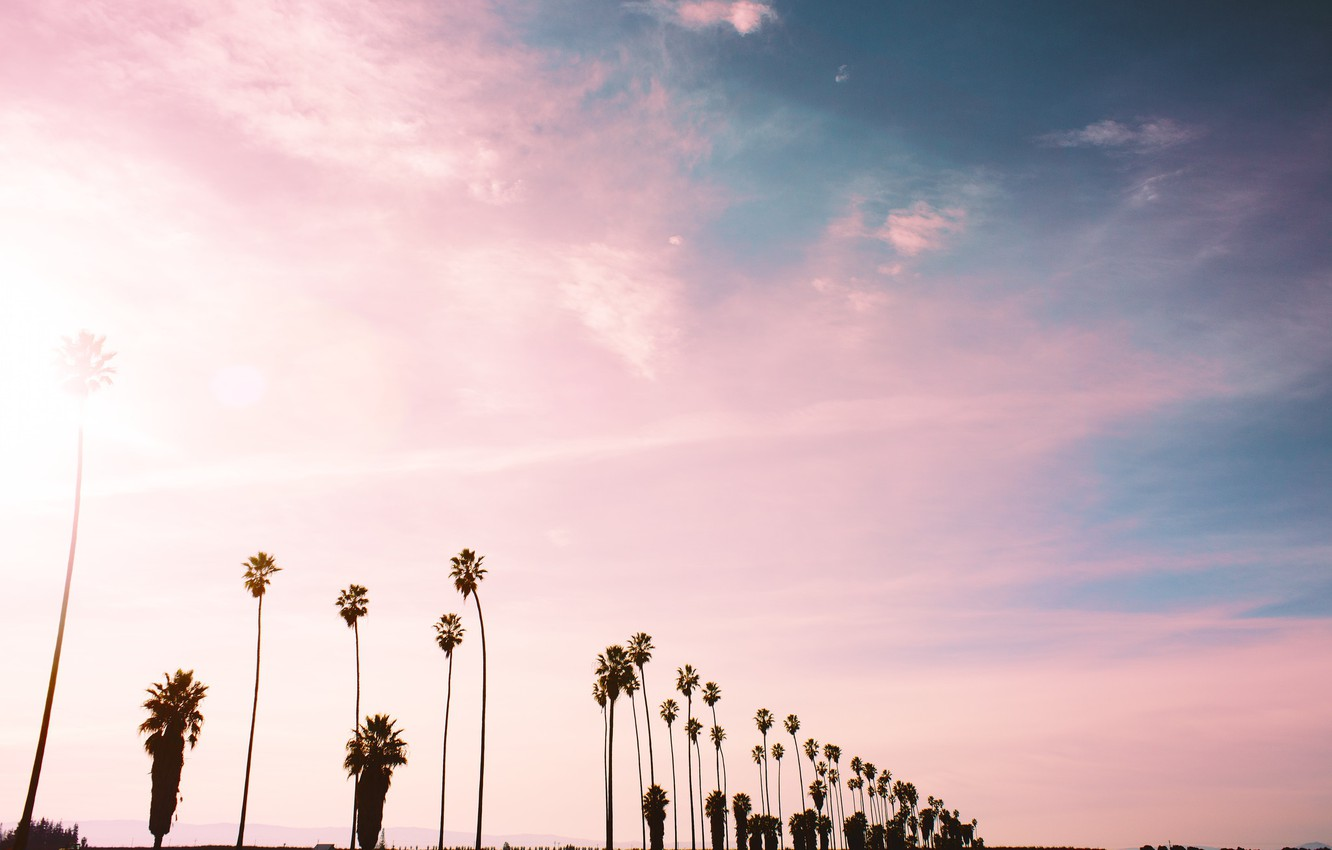 Photo wallpaper the sky, clouds, palm trees, pink
