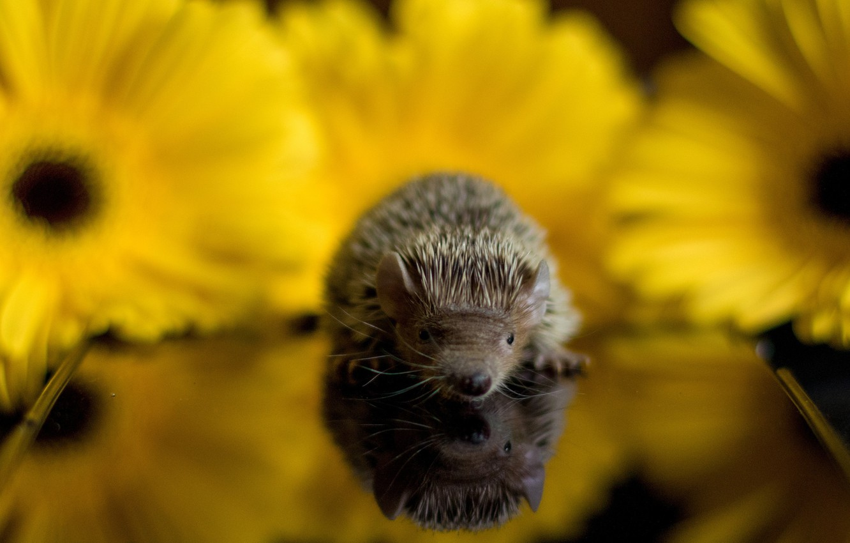 Photo wallpaper baby, hedgehog, baby