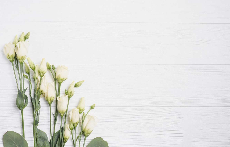 Photo wallpaper Flowers, White background, Eustoma