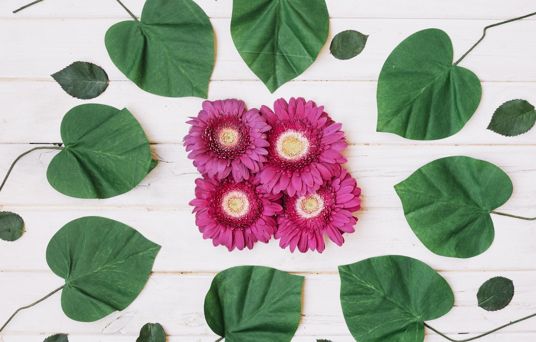 Photo wallpaper leaves, background, Flowers, gerbera