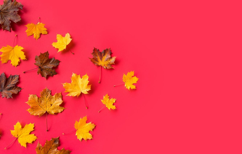 Photo wallpaper leaves, yellow, maple