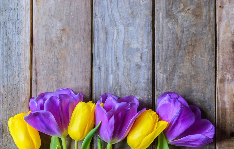 Purple tulip wallpaper Flower wallpapers