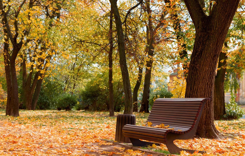 Photo wallpaper beauty, autumn in the Park, Cherkassy