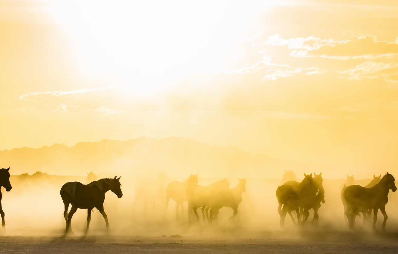Photo wallpaper fog, horses, morning