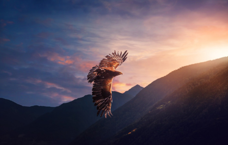 Photo wallpaper the sky, flight, bird, eagle, predator
