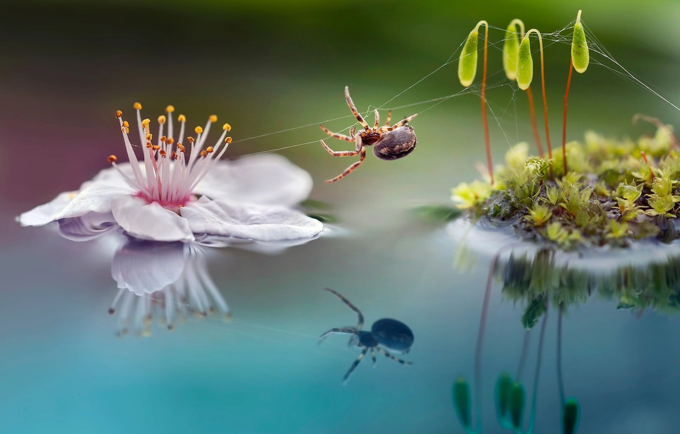Photo wallpaper flower, macro, nature, sprouts, moss, spider, Roberto Aldrovandi